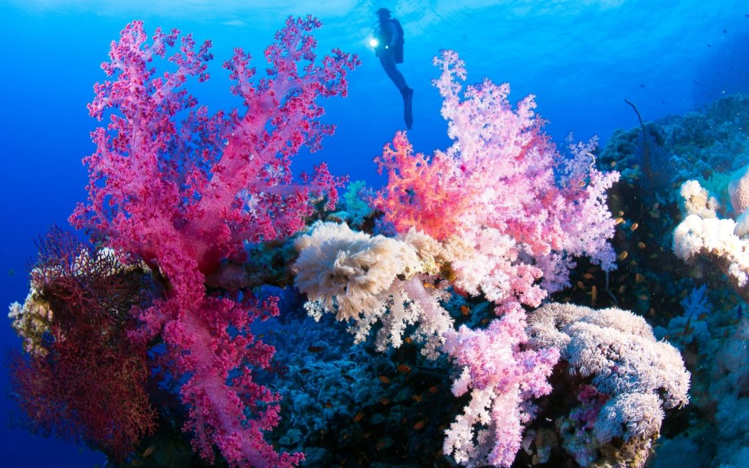 Mer Rouge 2014, St John Reefs – Red Sea 2014