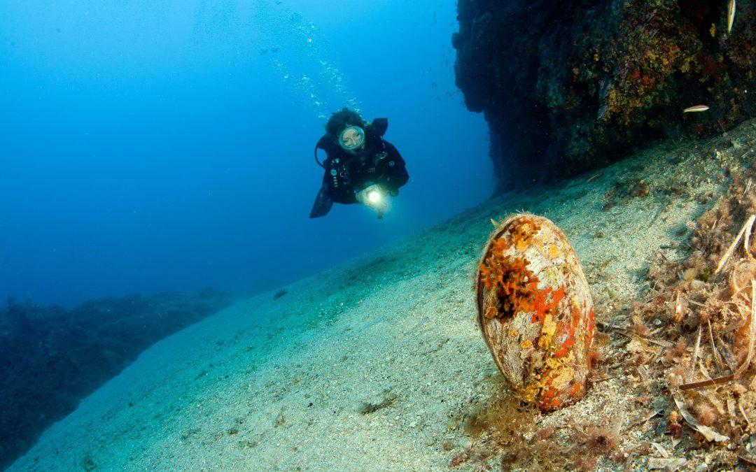les nacres de méditerranée en péril
